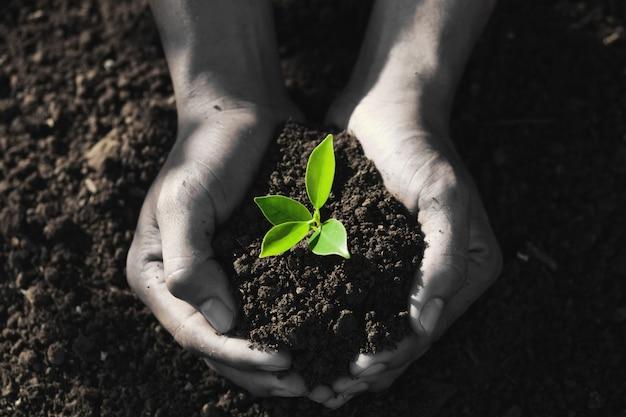 Main tenant le jeune arbre pour la plantation.