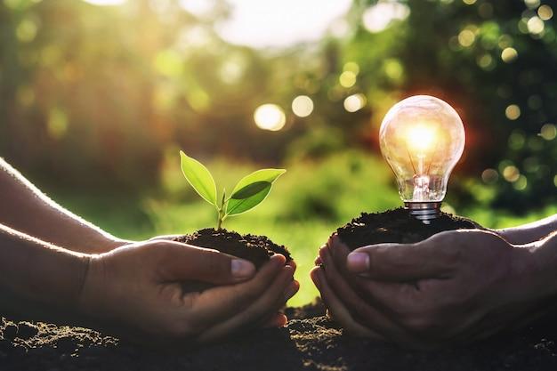 Main tenant le jeune plant avec ampoule sur la terre et le coucher du soleil