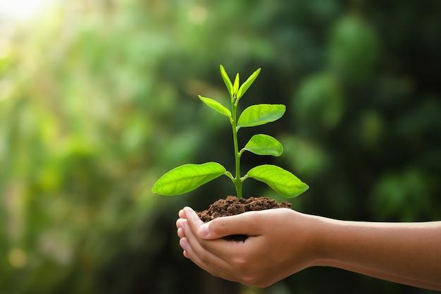 Main tenant jeune plante et fond vert avec le soleil. jour de la terre concept eco