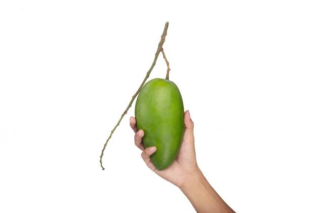 Main tenant la mangue sur blanc