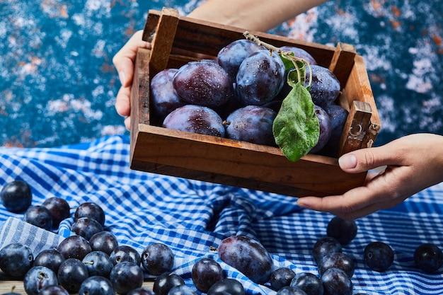 Main tenant un panier en bois de prunes de jardin sur bleu.