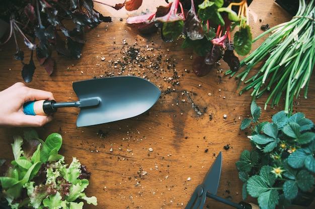 Main tenant une pelle de verger outils de jardinage avec des semis potager biologique urbain