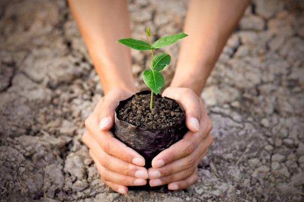 Main tenant une petite plante en croissance