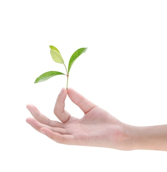 Main tenant la plante sur fond blanc