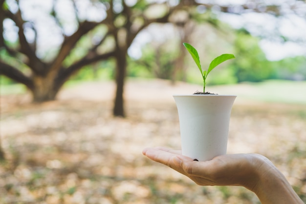 Main tenant la plante en pot.