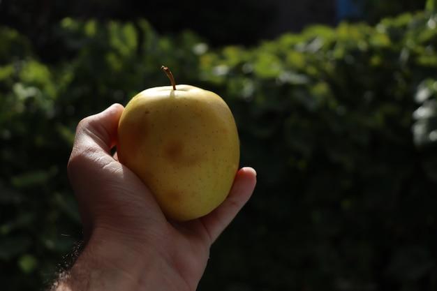 Main tenant la pomme jaune avec la nature floue de fond vert