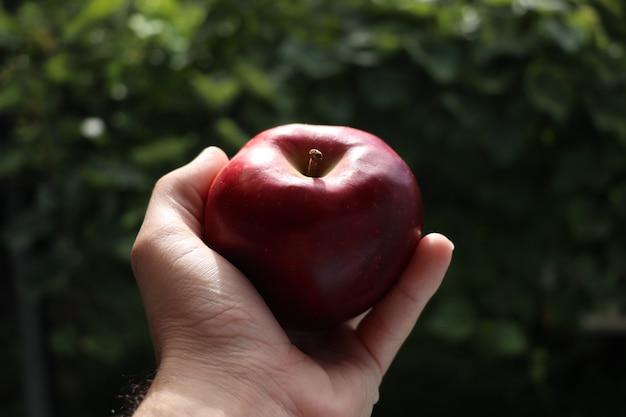 Main tenant la pomme rouge avec la nature floue de fond vert