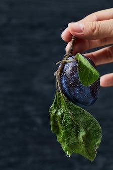 Main Tenant Une Prune Fraîche Sur Fond Noir. Photo gratuit