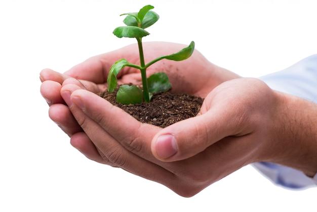 Main tenant les semis dans le nouveau concept de vie sur blanc