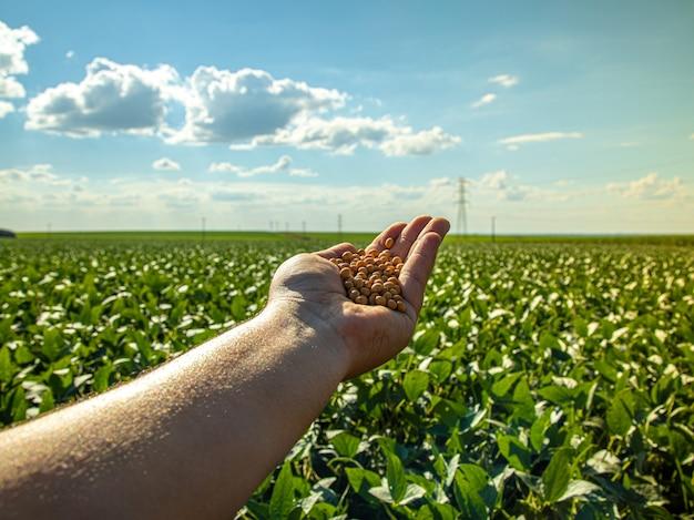 Main tenant le soja avec platation et ciel à l'horizon et détails en macro