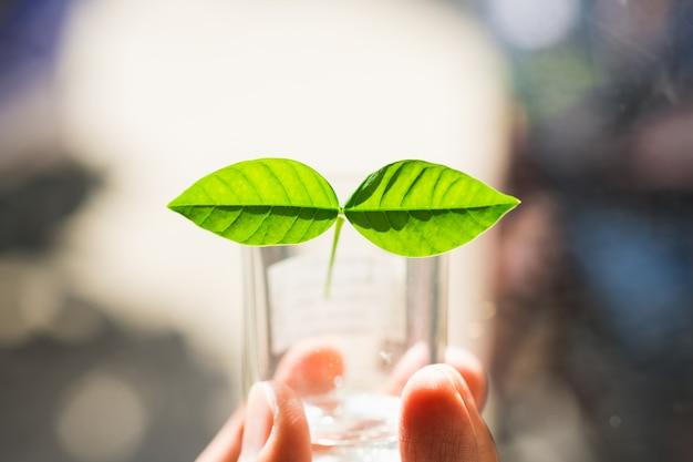 Main tenant un verre avec deux feuilles vertes
