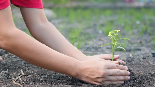 Main tenir la plantation de plus en plus un arbre dans le sol sur le jardin