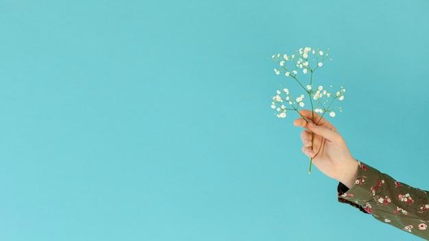 Main, tenue, fleur, copie, espace