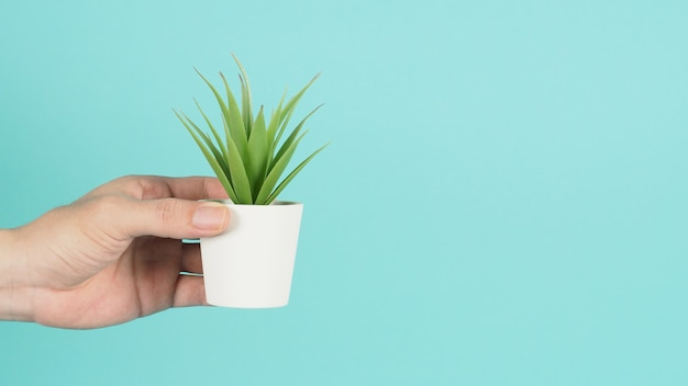 La main tient des cactus artificiels ou un arbre en plastique sur fond vert menthe ou bleu tiffany.