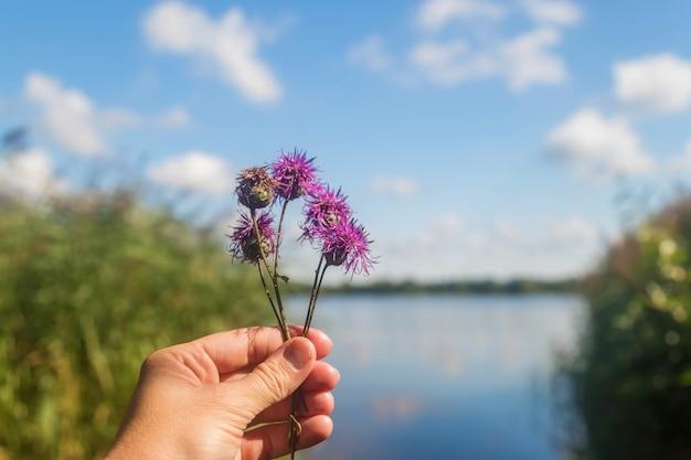 Main tient des fleurs sauvages violettes sur le fond du lac et ciel bleu avec des nuages