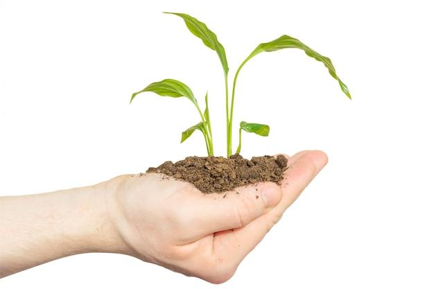 Une main tient une pousse avec la terre sur un fond pastel clair.