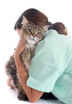 Maine coon chat et vétérinaire