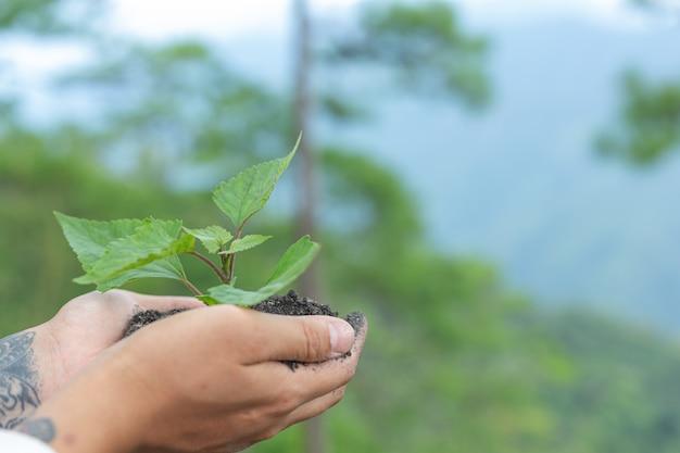 Mains d'arbres poussant des semis.