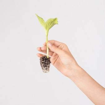Mains de culture tenant une plante en croissance