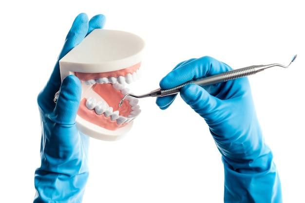 Mains dans des gants bleus examinant le modèle de dents avec un bâton d'outil dentaire isolé sur fond blanc