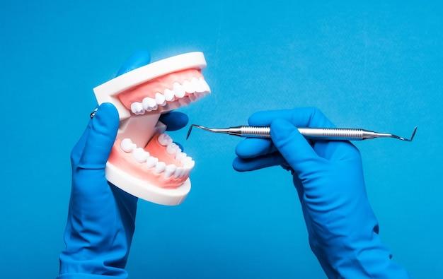 Mains dans des gants bleus tenant un modèle de dents dentaires sur fond bleu