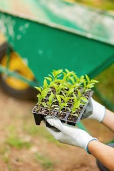 Des mains dans des gants de jardin tiennent un ensemble de pots avec des semis de poivre pour planter des plantes au printemps. voiture de jardin floue sur fond. notion de l'environnement. culture biologique à domicile.