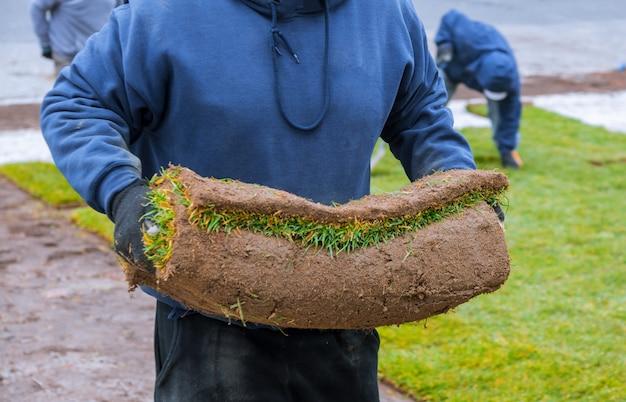 Mains dans le jardinage portant de l'herbe verte, l'installation sur la pelouse.