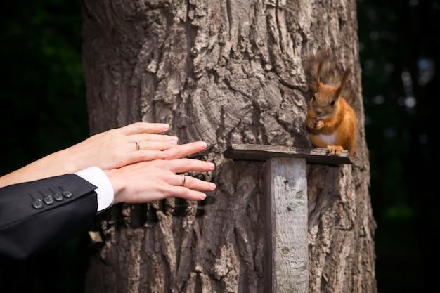 Mains du marié et de la mariée avec écureuil