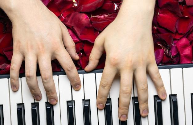 Les mains du pianiste sur les pétales de fleurs de rose rouge jouant une sérénade romantique pour la saint-valentin
