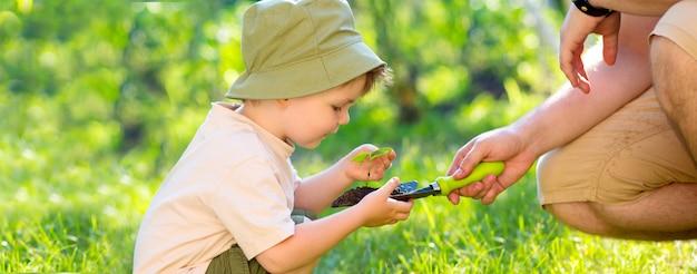 Mains d'un enfant prenant une plante des mains d'un homme