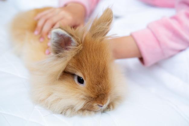 Mains d'enfants caressant un lapin rouge