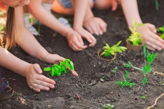 Mains d'enfants plantant un jeune arbre sur un sol noir ensemble comme concept mondial de sauvetage