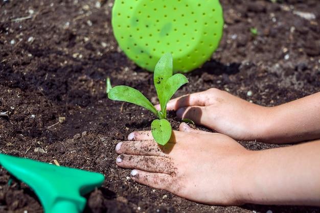 Mains d'enfants plantant des semis dans le sol