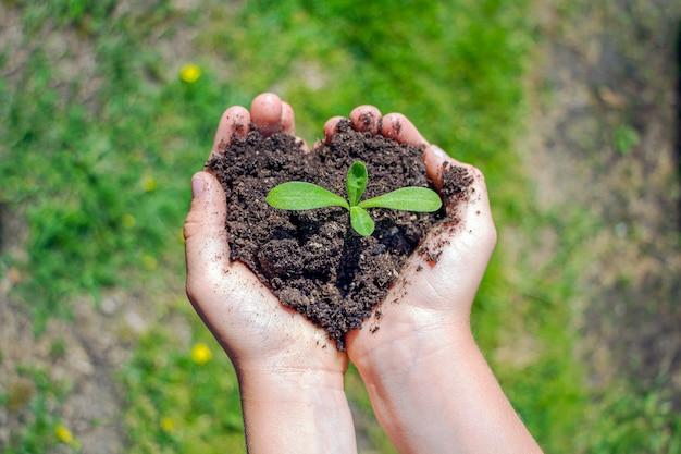 Les mains des enfants tiennent le sol avec des semis de plantes