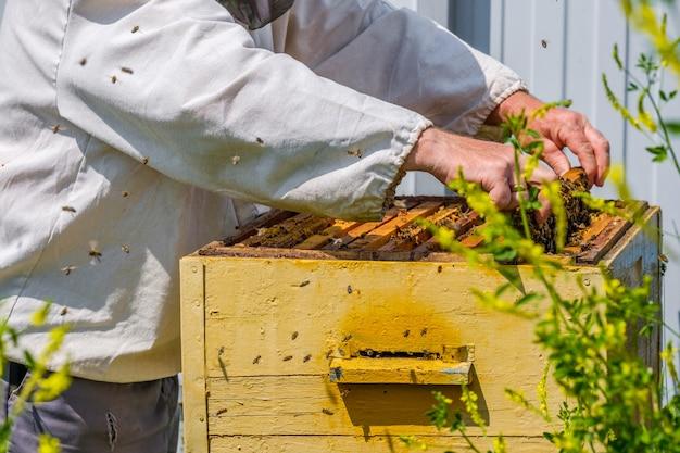 Les mains enlèvent le cadre avec des nids d'abeilles de la ruche un apiculteur inspecte les abeilles
