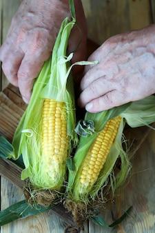 Les mains épluchent le maïs