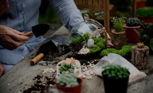 Mains faisant un terrarium avec des plantes miniatures