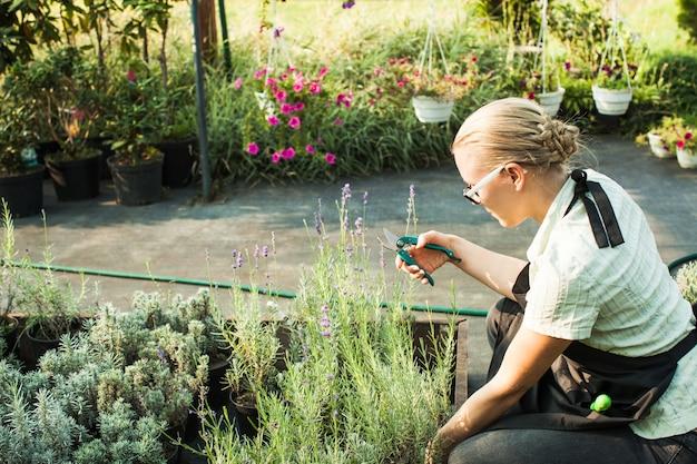 Mains femelles coupant des semis dans un pot à l'aide d'un sécateur à effet de serre