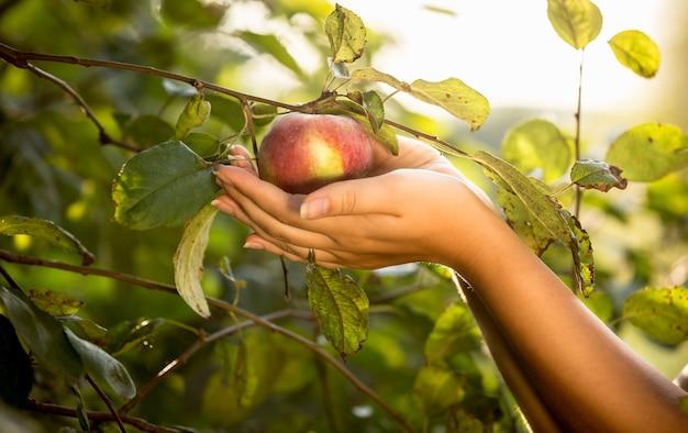 Mains femelles tenant la pomme rouge au jardin au jour ensoleillé