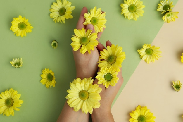 Mains féminines et chrysanthèmes sur fond bicolore.