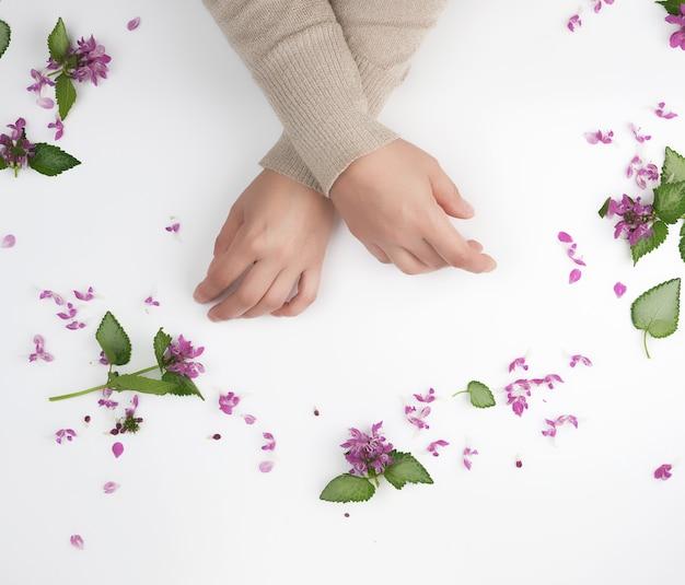 Mains féminines et petites fleurs roses sur fond blanc