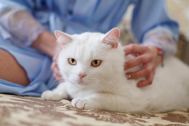 Mains de femme caressant un chat blanc en bonne santé. soins des mains humaines et caressant le chat moelleux se bouchent. mains du propriétaire tapotant un chat propre et bien entretenu. animal moelleux avec maîtresse