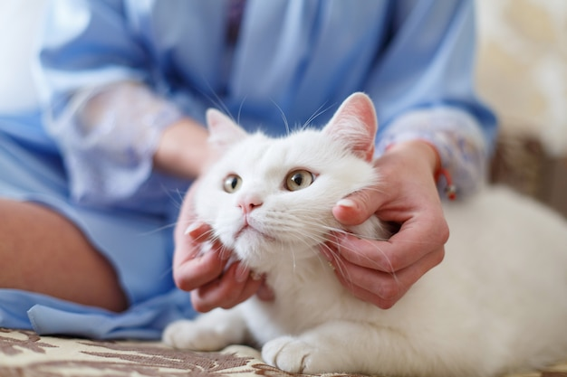 Mains de femme caressant le chat blanc. soin des mains humaines et caressant le chat moelleux. propriétaire mains tapotant chat. animal moelleux