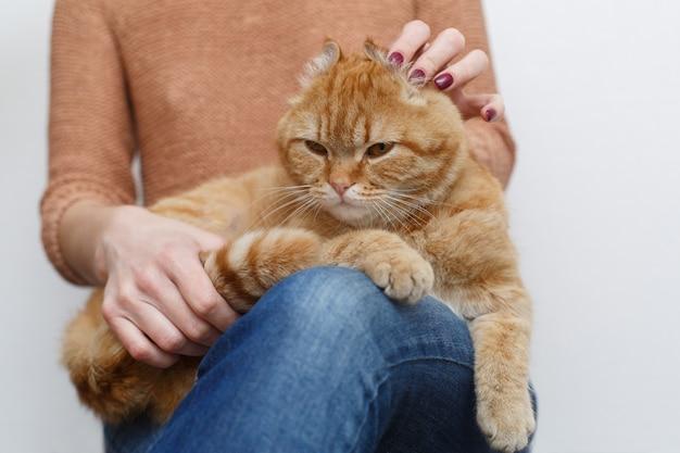 Mains de femme caressant un chat rouge en bonne santé. soins des mains humaines et caressant le chat moelleux se bouchent. propriétaire mains tapotant chat drôle. animal domestique moelleux. animaux et concept de mode de vie