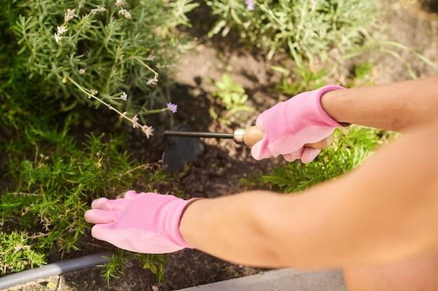 Mains de femme désherbant les mauvaises herbes sur le parterre de fleurs