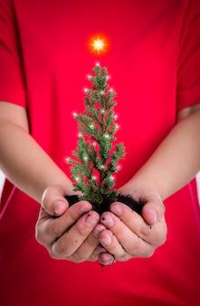Mains femme détiennent un petit arbre de noël