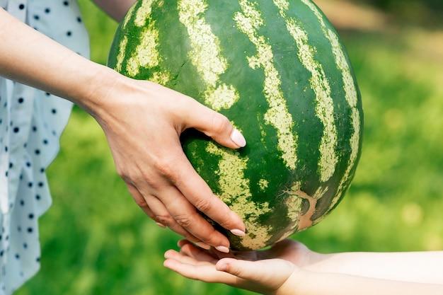 Les mains de la femme donnent aux mains de l'enfant une pastèque entière en gros plan.