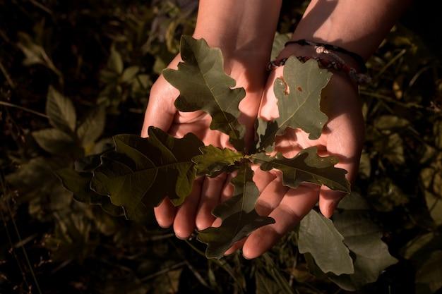 Mains de femme avec une jeune pousse d'un chêne