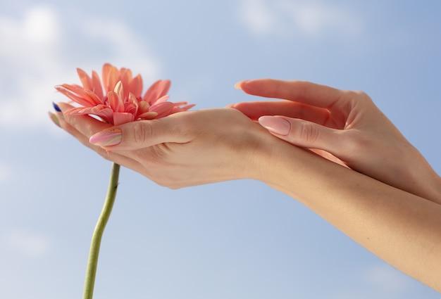 Mains de femme avec manucure nue élégante tenir une fleur rose tendre