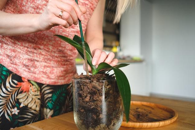 Mains de femme plantant une fleur dans la maison